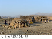Malab-Dei village with huts made out of palm mats, Danakil depression, Afar region, Ethiopia, March 2015. Стоковое фото, фотограф Eric Baccega / Nature Picture Library / Фотобанк Лори