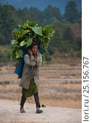 Купить «Apatani woman carrying heavy load of leaves. The woman has facial tattoos and traditional cane nose plugs / Yapin Hulo, now  outlawed. Apatani Tribe, Ziro...», фото № 25156767, снято 21 августа 2018 г. (c) Nature Picture Library / Фотобанк Лори