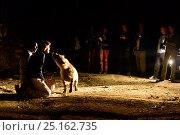 Купить «Tourists watching man feeding Hyaenas (Crocuta crocuta) at night in Harar City, this has been a tradition for several centuries, and has now become a show for tourists. Ethiopia, November 2014», фото № 25162735, снято 12 декабря 2017 г. (c) Nature Picture Library / Фотобанк Лори