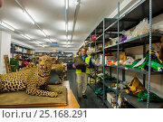 Купить «Man with taxidermy specimens and endangered wildlife products confiscated by the Spanish police at Adolfo Suarez Madrid-Barajas Airport in accordance with...», фото № 25168291, снято 22 мая 2018 г. (c) Nature Picture Library / Фотобанк Лори