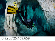 Scuba diver following a line marking the route through underwater caverns and tunnels forming an underground river system known by the local Maya people... Стоковое фото, фотограф Brandon Cole / Nature Picture Library / Фотобанк Лори