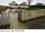 Купить «Homes flooded by River Thames, Chertsey, Surrey, UK, February 2014.», фото № 25170679, снято 20 июля 2018 г. (c) Nature Picture Library / Фотобанк Лори
