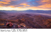 Sunrise over Death Valley (from Corkscrew Peak) with Cottontop cactus  (Echinocactus polycephalus). View extending all the way to Badwater  (center left... Стоковое фото, фотограф Floris van Breugel / Nature Picture Library / Фотобанк Лори