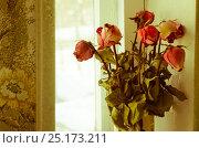Засохшие розы. Стоковое фото, фотограф Елена Корепанова / Фотобанк Лори