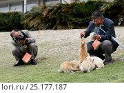 Купить «Visitors feeding rabbits at Okunoshima 'Rabbit Island', Takehara, Hiroshima, Japan, May 2010.», фото № 25177187, снято 10 июля 2020 г. (c) Nature Picture Library / Фотобанк Лори