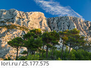 Купить «Montagne Sainte-Victoire at dawn, Var, Provence, France, October 2012.», фото № 25177575, снято 19 июля 2018 г. (c) Nature Picture Library / Фотобанк Лори