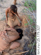 Купить «Naro San women digging deep in the sand to get to the root of a kombrua plant which is thirst-quenching and nutritious. Kalahari, Ghanzi region, Botswana, Africa. Dry season, October 2014.», фото № 25179327, снято 5 августа 2020 г. (c) Nature Picture Library / Фотобанк Лори