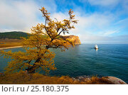 Купить «Tree on Lake Baikal shore in autumn with boat visible beyond. Siberia, Russia, October 2010.», фото № 25180375, снято 14 января 2019 г. (c) Nature Picture Library / Фотобанк Лори