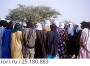 Купить «Gathering of Peul / Fula people for ceremony, Ngarawal Fuduk near Agadez, Niger, 2005.», фото № 25180883, снято 19 августа 2018 г. (c) Nature Picture Library / Фотобанк Лори