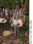 Купить «Mbuti pygmy initiation hunt, with two boys in traditional blue body paint and straw skirt. One boy is holding catch of Blue Duiker (Philantomba monticola...», фото № 25182299, снято 9 июля 2020 г. (c) Nature Picture Library / Фотобанк Лори