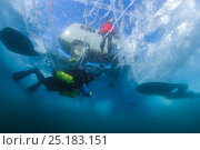 Купить «Diver swims under clear transparent ice (1m thick) with minivan and person visible above. Lake Baikal, Russia, March 2012.», фото № 25183151, снято 24 февраля 2019 г. (c) Nature Picture Library / Фотобанк Лори