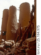 Dogon mud  grain silos. Mali, 2005-2006. Стоковое фото, фотограф Steve O. Taylor (GHF) / Nature Picture Library / Фотобанк Лори