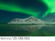 Купить «Northern lights above Flakstad beach. Lofoten, Nordland, Norway. March 2006», фото № 25188583, снято 19 июля 2018 г. (c) Nature Picture Library / Фотобанк Лори