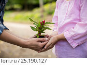 Купить «Mid section of grandmother and granddaughter holding sapling», фото № 25190127, снято 10 ноября 2016 г. (c) Wavebreak Media / Фотобанк Лори