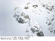 Купить «Polar bear (Ursus maritimus) climbing mountain slope, Wrangel Island, Far Eastern Russia, March.», фото № 25192107, снято 23 января 2019 г. (c) Nature Picture Library / Фотобанк Лори