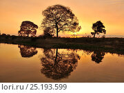 Купить «Pink Ipe tree (Tabebuia ipe / Handroanthus impetiginosus) silhouetted at sunset and reflected in waters of the pantanal, Pantanal, Mato Grosso State, Western Brazil.», фото № 25193599, снято 4 июля 2020 г. (c) Nature Picture Library / Фотобанк Лори