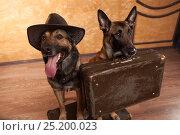 Купить «Two dog travelers with casees», фото № 25200023, снято 21 февраля 2020 г. (c) Владимир Семёнов / Фотобанк Лори
