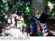 Ceremonial procession during wedding, Ambeduco village. Orango Island, Guinea-Bissau, December 2013. Стоковое фото, фотограф Enrique Lopez-Tapia / Nature Picture Library / Фотобанк Лори
