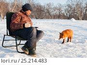 Купить «Red fox (Vulpes vulpes) approaching photographer Sergey Gorshkov in snow, Kamchatka, Far East Russia.», фото № 25214483, снято 28 мая 2020 г. (c) Nature Picture Library / Фотобанк Лори
