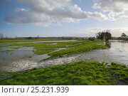 Купить «Hugely swollen River Parrett overflowing onto Aller moor near Staithe after weeks of heavy rain, Somerset Levels, UK, January 2013.», фото № 25231939, снято 21 августа 2018 г. (c) Nature Picture Library / Фотобанк Лори