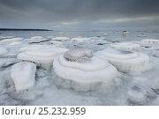 Купить «The Baltic Sea freezing up in Northern Estonia. Lahemaa National Park, January 2012.», фото № 25232959, снято 15 августа 2018 г. (c) Nature Picture Library / Фотобанк Лори