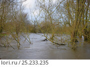 Купить «Trees and bushes fringing the River Avon partly submerged after weeks of heavy rain caused it to burst its banks, Lacock, Wiltshire, UK, January 2013.», фото № 25233235, снято 16 декабря 2017 г. (c) Nature Picture Library / Фотобанк Лори
