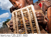 Купить «Mozambican children with captive passerines including Red-throated Twinspot (Hypargos niveoguttatus). Birds are caught to eat whilst watching fields against...», фото № 25237183, снято 18 октября 2019 г. (c) Nature Picture Library / Фотобанк Лори
