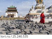 Купить «Man feeding feral pigeons (Columba livia) in front of Gandan Monastery, Ulan Bator, Mongolia, September», фото № 25240535, снято 26 сентября 2018 г. (c) Nature Picture Library / Фотобанк Лори