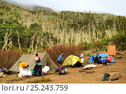 Купить «People relaxing at Machame Camp (3010 m) on Mount Kilimanjaro trek, Tanzania, October 2008», фото № 25243759, снято 20 августа 2018 г. (c) Nature Picture Library / Фотобанк Лори