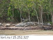 Купить «Nile Crocodiles (Crocodylus niloticus) basking at water side. St. Lucia, KwaZulu-Natal, South Africa, October.», фото № 25252327, снято 15 октября 2019 г. (c) Nature Picture Library / Фотобанк Лори