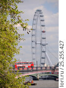 Купить «London Plane Tree (Platanus x hispanica) with dangling fruits overhanging the River Thames with the London Eye and a double decker bus crossing Lambeth Bridge in the background, London, UK, May. 2012», фото № 25255427, снято 26 мая 2018 г. (c) Nature Picture Library / Фотобанк Лори