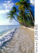 Купить «Palm trees line the beach at Pigeon Point, Tobago», фото № 25255835, снято 26 мая 2019 г. (c) Nature Picture Library / Фотобанк Лори