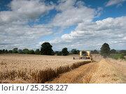 Купить «Combine harvester combining Oats, Haregill Lodge Farm, Ellingstring, North Yorkshire, England, UK, August.», фото № 25258227, снято 16 декабря 2017 г. (c) Nature Picture Library / Фотобанк Лори