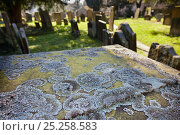 Купить «Lichen (Parmelia saxatilis) growing on gravestone in churchyard. Peak District National Park, Derbyshire, UK, March 2012.», фото № 25258583, снято 18 августа 2018 г. (c) Nature Picture Library / Фотобанк Лори