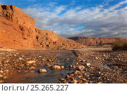 Купить «Tamdaght Oasis along the Dades Valley, Morocco 2011», фото № 25265227, снято 15 августа 2018 г. (c) Nature Picture Library / Фотобанк Лори