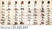 Tableau to accompany Professor Agassiz opening sketch on 'The provinces of the animal world and their relationship to the types of man'. From Dr. Josiah... Стоковое фото, фотограф Paul D Stewart / Nature Picture Library / Фотобанк Лори