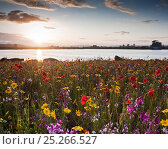 Купить «Cardiff Bay in the evening, with meadow flowers on the Barrage. Cardiff, Wales, July 2011.», фото № 25266527, снято 21 сентября 2019 г. (c) Nature Picture Library / Фотобанк Лори