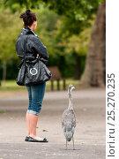 Купить «Juvenile Grey heron (Ardea cinerea) and women looking in the same direction, Regent's Park, London, England, UK, May 2011», фото № 25270235, снято 15 декабря 2017 г. (c) Nature Picture Library / Фотобанк Лори