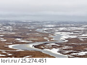 Купить «Aerial view of partially frozen tundra with ice river, Taimyr Peninsula, Siberia, Russia, June 2010», фото № 25274451, снято 18 февраля 2020 г. (c) Nature Picture Library / Фотобанк Лори