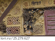 Купить «Insect hotel / Artificial nest holes and shelter for insects and invertebrates, Nordrhein-Westfalen, Germany», фото № 25279627, снято 25 сентября 2018 г. (c) Nature Picture Library / Фотобанк Лори