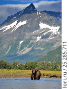 Grizzly bear (Ursus arctos horribilis) fishing in landscape, Katmai NP, Alaska, USA, August. Стоковое фото, фотограф Andy Rouse / Nature Picture Library / Фотобанк Лори