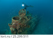 Купить «Diver at Japanese mini submarine wreck 50 meters away from the Sanko Maru wreck in New Hanover, New Ireland, Papua New Guinea, June 2010.», фото № 25299511, снято 17 августа 2018 г. (c) Nature Picture Library / Фотобанк Лори