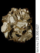 Купить «Pyrite (FeS2, Iron sulfide). Sample from Butte Montana. Popularly known as 'fool's gold'. Formerly used in the production of sulfuric acid.», фото № 25300027, снято 14 декабря 2017 г. (c) Nature Picture Library / Фотобанк Лори