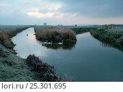 Купить «Mute swans (Cygnus olor) on the River Brue at dusk, Somerset Levels, near Meare, Somerset, UK, November 2010», фото № 25301695, снято 26 марта 2019 г. (c) Nature Picture Library / Фотобанк Лори