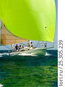 "Купить «J105 ""Whistler"" under spinnaker at the Grenada Sailing Festival, Caribbean, January 2010.», фото № 25305239, снято 18 августа 2019 г. (c) Nature Picture Library / Фотобанк Лори"