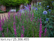 Купить «Garden with flower border and garden bench, Norfolk, UK», фото № 25306455, снято 18 октября 2019 г. (c) Nature Picture Library / Фотобанк Лори