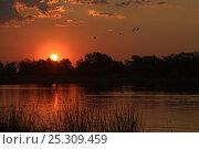 Купить «Okavano Delta at dawn, Botswana, April 2009», фото № 25309459, снято 6 декабря 2019 г. (c) Nature Picture Library / Фотобанк Лори