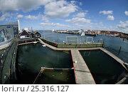 Купить «Harbour porpoise (Phocoena Phocoena) enclosure at the Fjord and Baelt centre, Norway, May 2009», фото № 25316127, снято 16 января 2018 г. (c) Nature Picture Library / Фотобанк Лори