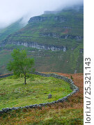 Купить «Stone wall dividing field from open rough land,  Vega de Pas, Cordillera cantabrica, Cantabria, Northern Spain, October 2006», фото № 25321143, снято 23 марта 2018 г. (c) Nature Picture Library / Фотобанк Лори
