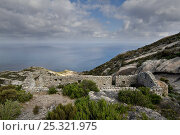 Купить «Remains of ancient monastery, Montecristo Island, Tuscany Archipelago National Park, Italy. June 2010», фото № 25321975, снято 22 июля 2018 г. (c) Nature Picture Library / Фотобанк Лори